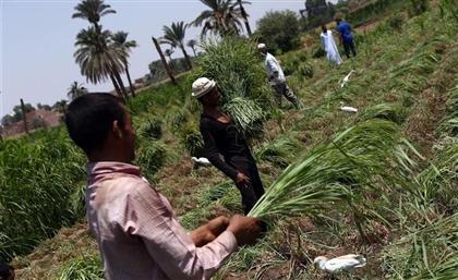 11 Medicinal Herbs Native to Egypt