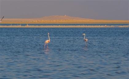National Project to Restore Fayoum's Lake Qarun is Underway