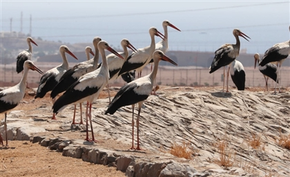 Egypt Shuts Down Wind Turbines to Protect Migrating Birds