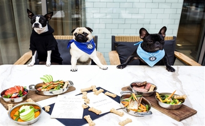 Fine-Dining for Dogs Is Now a Reality with Petman